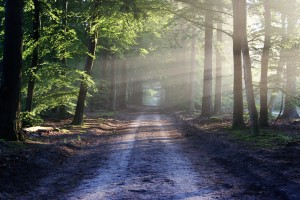 The Long and Winding Road to Empowerment